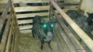 вотчина - эко ферма